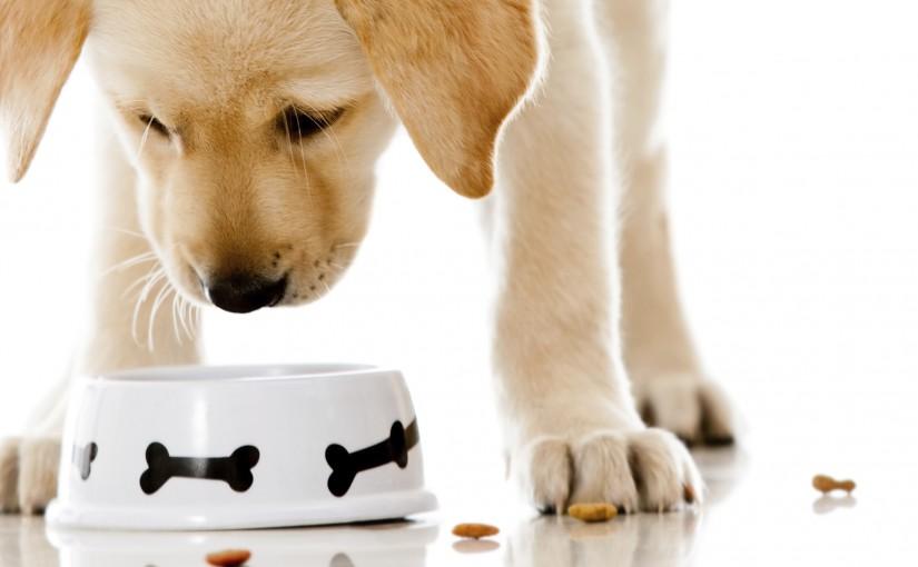 A reklámok ereje, és ami mögötte van – avagy a Belcando kutyatápokban nem fogsz csalódni!